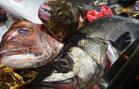 長崎県・五島列島や北海道直送の魚介