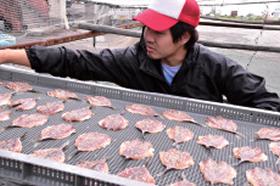自社の水産加工場。獲れたての新鮮な魚を開いて海洋深層水に漬け、天日に当てて干して干物に加工する